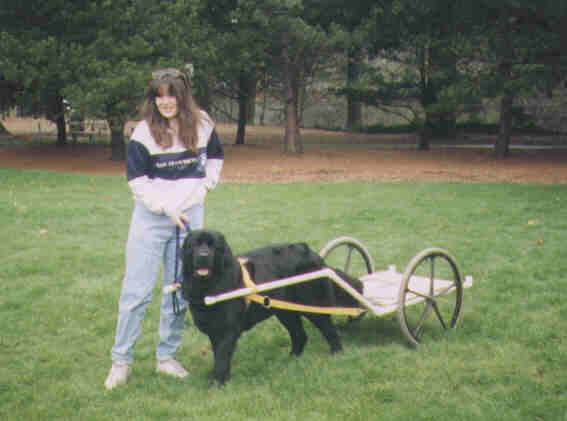 how to build a dog cart